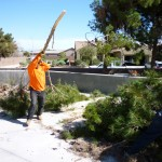 Affordable Tree Service @ The Water Reclamation District